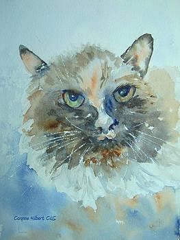 Portrait of a Cat by Corynne Hilbert