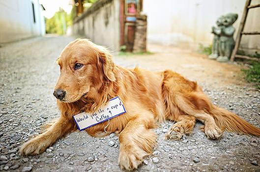 Portrait of a dog by Keerati Preechanugoon