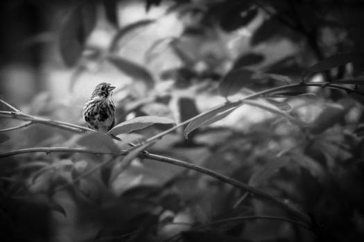 Portrait Of A Finch by Bradley R Youngberg