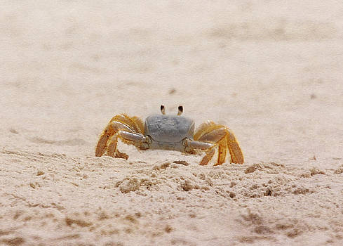 Judy Hall-Folde - Portrait of a Ghost Crab