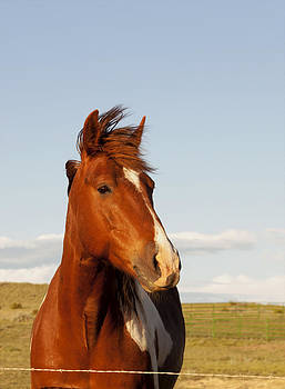 Portrait of a Horse by Dana Moyer