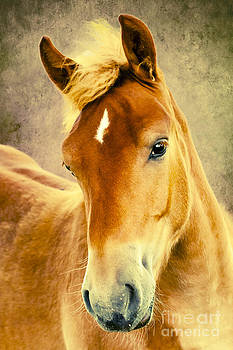 Portrait of a Horse by Izabela Kaminska