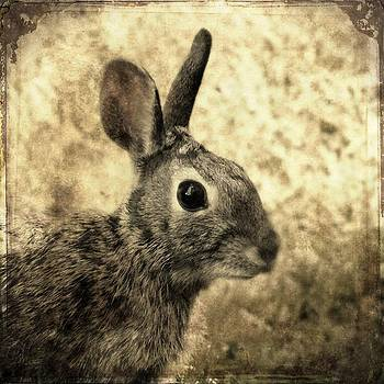 Gothicrow Images - Sepia Rabbit