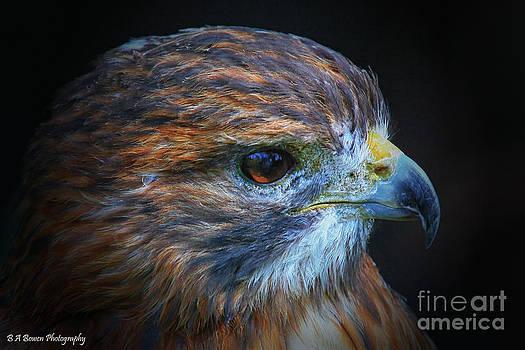 Barbara Bowen - Portrait of a Red-tailed Hawk