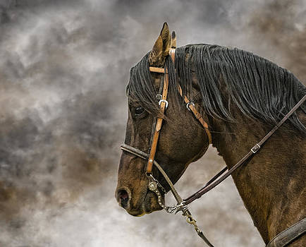 Portrait of a Rope Horse by Jana Thompson