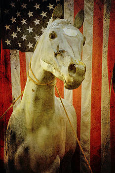 Portrait of an American Horse by Sharon Kalstek-Coty