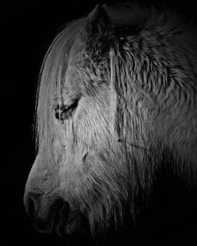 Portrait of Horse by Alena Bytcankova