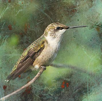 Portrait of Ruby-Throated Hummingbird by Cheryl Ann Quigley