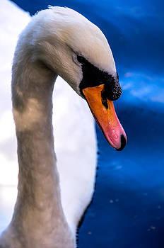 Jenny Rainbow - Portrait of the Shy White Swan
