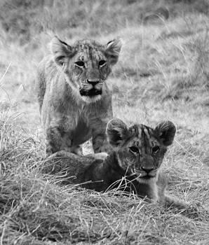 Mauverneen Blevins - Portrait of Two Cubs