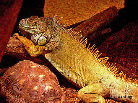 Posing Iguana and friend by Jale Fancey