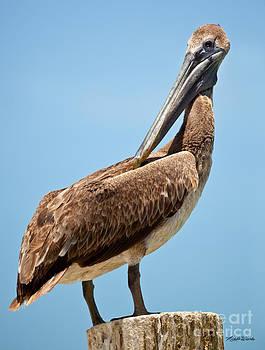 Michelle Constantine - Posing Pelican