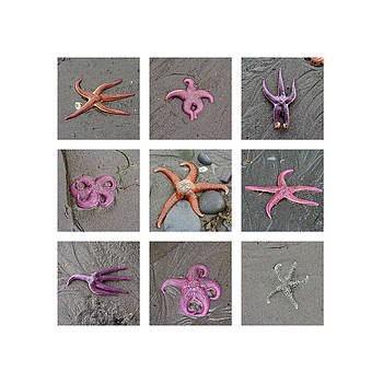 Art Block Collections - Posing Starfish