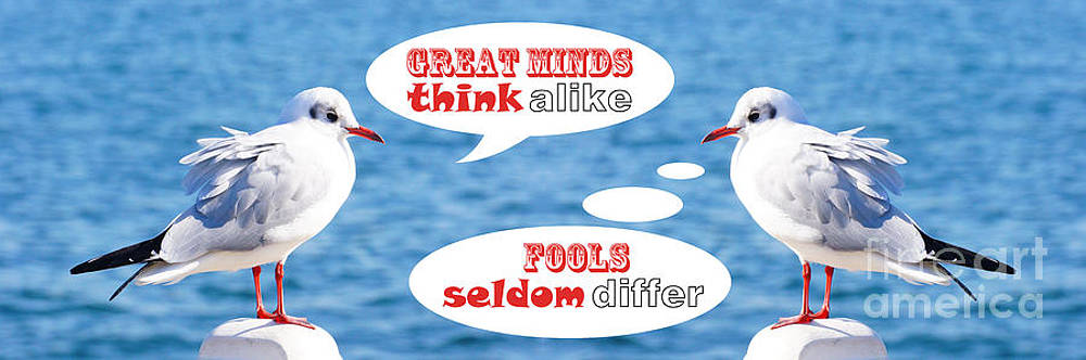 Beverly Claire Kaiya - Positive-Thinking and Negative-Thinking Seagull Twins 4