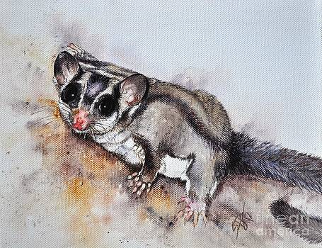 Possum cute Sugar Glider by Sandra Phryce-Jones