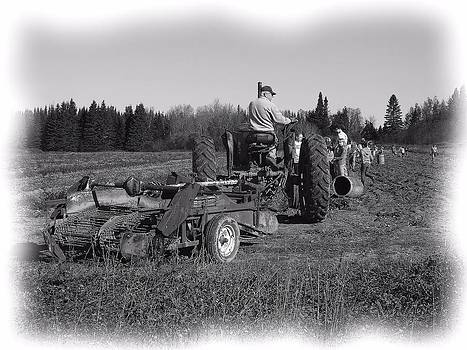 Potato Harvest 16 by Gene Cyr
