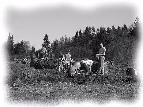 Potato Harvest 19 by Gene Cyr
