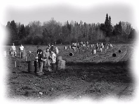 Potato Harvest 2 by Gene Cyr