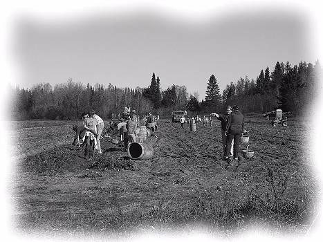 Potato Harvest 20 by Gene Cyr