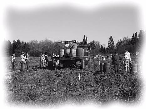 Potato Harvest 3 by Gene Cyr