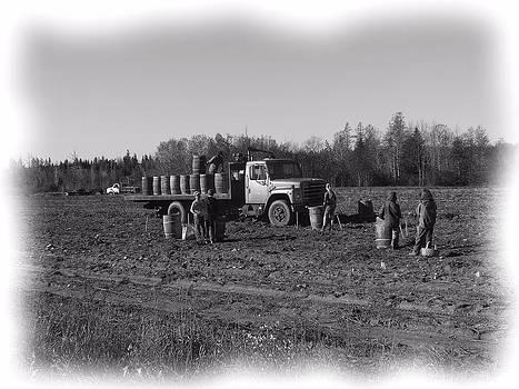 Potato Harvest 5 by Gene Cyr