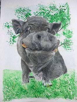 Potbellied Pig Pet Portraits Watercolor Memorial Made to Order 5x7 inch by Shannon Ivins