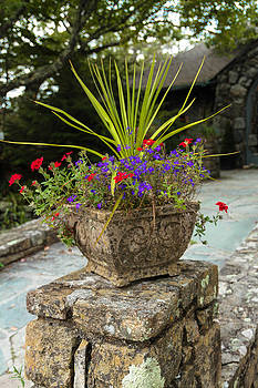 Potted Flowers-Vertical by Dulce Levitz