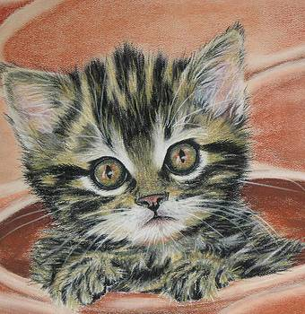 Potted Kitty by Linda Eversole