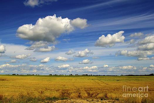 Alanna DPhoto - Prairie Daydream