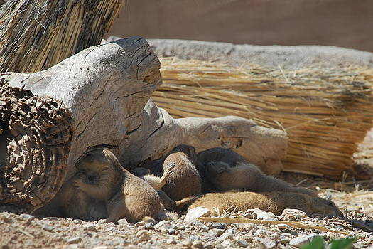 Prairie Dog Family by Kelly Youngblood