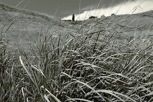 Dwayne Schnell - Prairie Grass