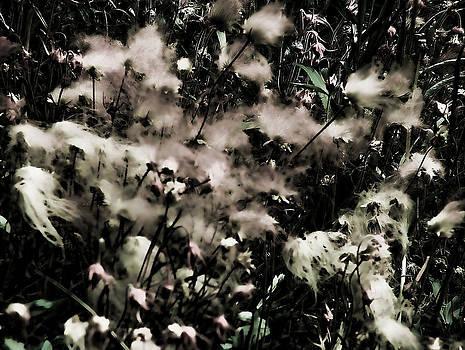 Joe Bledsoe - Prairie Smoke