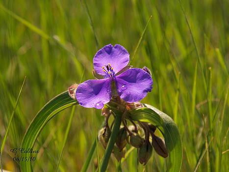 Prairie Wild Flower by Gordon Collins