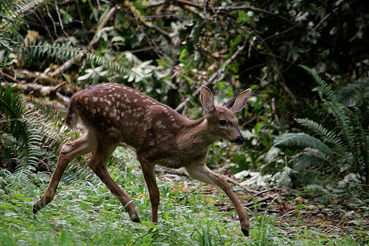 Prancer is here by Kym Backland