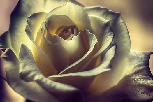 Prayer Candle Rose by Darlene Kwiatkowski