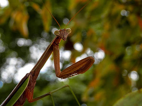 Praying Mantis Pose by Heather Sylvia