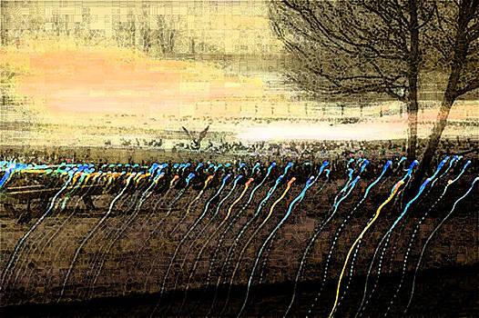 Pre Dawn Life by Rich Collins
