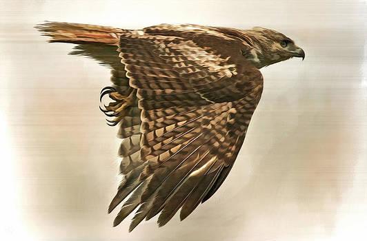 Predator by Hazel Billingsley