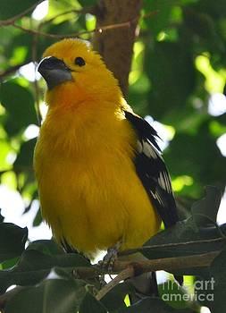 Pretty Bird by Kathleen Struckle