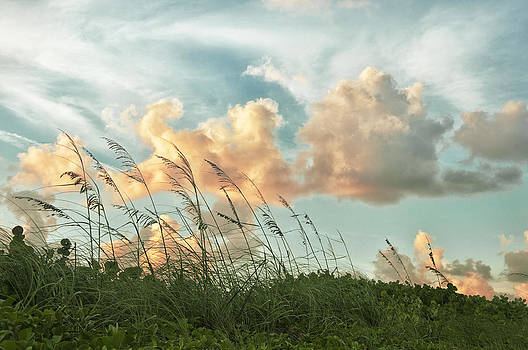 Pretty Clouds and Sea Oats by Louise Hill