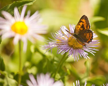 Pretty Flower by Dawn Morrow
