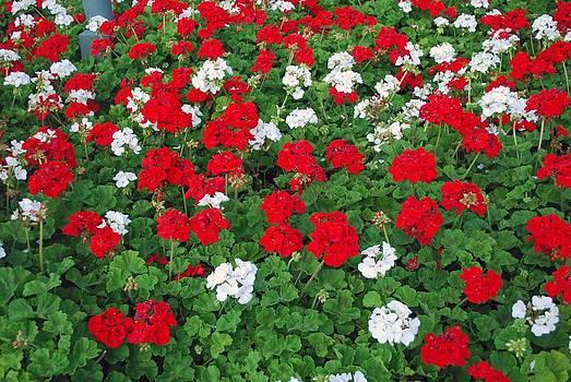 Gary Wonning - Pretty Flowers