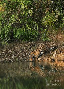 Pretty girl sipping water by Manjunath Krishnamurthy