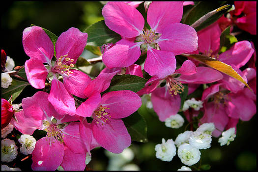 Pretty in Pink I by Aya Murrells