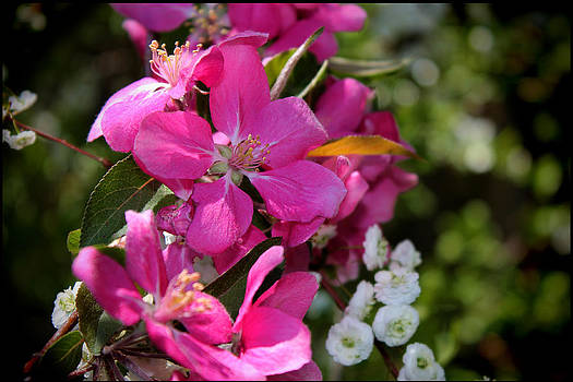 Pretty in Pink II by Aya Murrells