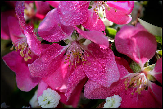 Pretty in Pink III by Aya Murrells