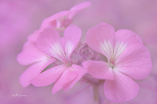 Pretty in Pink by Jeff Swanson