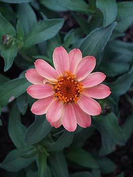 Pretty in Pink by Kayla Craig