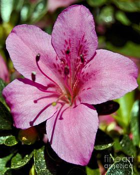 Leslie Cruz - Pretty In Pink