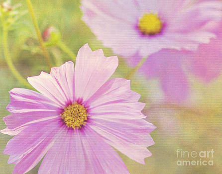 Pretty In Pink by Pam  Holdsworth